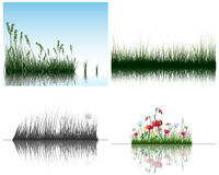 Grass on water royalty free stock photography