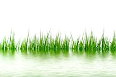Grass in the water Royalty Free Stock Images