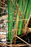 Grass in Water. Closeup of green and brown grass in river Stock Photo