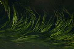 Grass in water Royalty Free Stock Photo