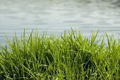 Grass and water Stock Photos