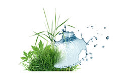 Grass And Water Stock Image
