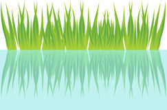 Grass and water Royalty Free Stock Photography