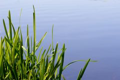 Grass and water Royalty Free Stock Photo