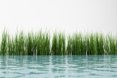 Grass and water Stock Photo