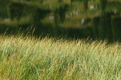 Grass and water Stock Images