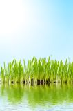 Grass and water Royalty Free Stock Image