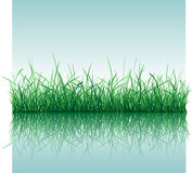 Grass with Water Stock Images