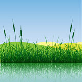 Grass and Water. A grass meadow with water Stock Photo