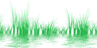Grass on the water Stock Photography