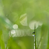 Grass and water drop Stock Photography