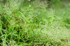 Grass and water drop background Royalty Free Stock Image