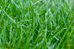 Grass water drop. If a warm, clear day is followed by a cool, clear evening, dew will likely form. On a normal warm day, water evaporates from the warm ground Stock Photos