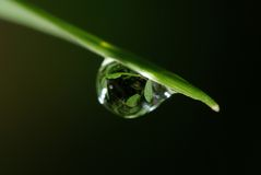 Grass and water droplet Stock Photos