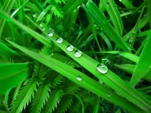 Grass and water droplets Stock Photo