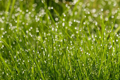 Grass with water droplets Royalty Free Stock Photos