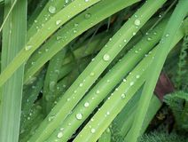 Grass Water Droplets Stock Photos