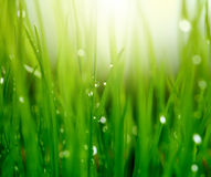 Grass with water drops Royalty Free Stock Photos