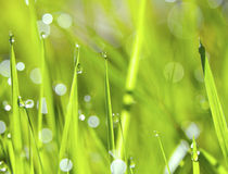 Grass and water drops Royalty Free Stock Photo