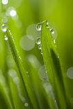 Grass with water drops. Background Royalty Free Stock Photography