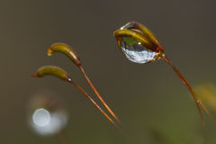 Grass and water drops Royalty Free Stock Images