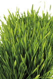 Grass with water drops, close-up Stock Photos
