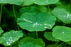 Grass Water Drops Garden Nature Green Leaves stock photo