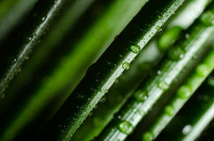 Grass in water drops Royalty Free Stock Image
