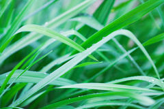 Grass with water drops, toning in cold tones Stock Photo
