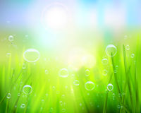 Grass with water drops. Vector illustration. Stock Images