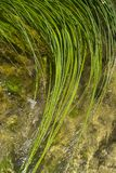 Grass in water in Krka National Park Croatia Europe Stock Photos