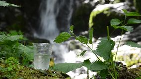 Grass of water near waterfall. Glass of drinking water near the foliage waterfall stock video