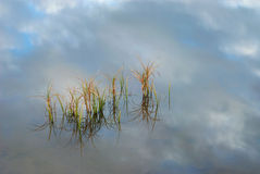 Grass in water, reflection sky Royalty Free Stock Photography