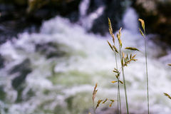Grass on waterfall background Royalty Free Stock Images