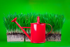 Grass and watering can Royalty Free Stock Image
