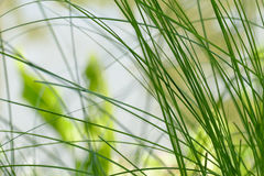 Grass at waterside of the pond Royalty Free Stock Photo