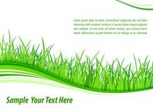 Grass wave background vector illustration