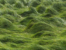 Grass waves Royalty Free Stock Photo