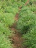 Grass way Stock Photo