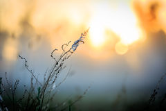 Grass with web on morning meadow Stock Photography