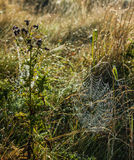Grass Web Royalty Free Stock Photo