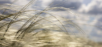 Grass website banner Royalty Free Stock Photo