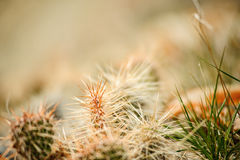 Grass and wheat background Stock Image