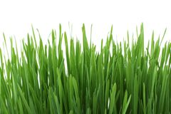 Grass, Wheatgrass, Grass Family, Plant Stock Photography