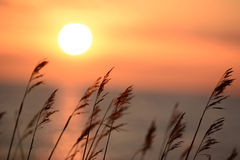 Grass whit a colorful sunset in the background Stock Image