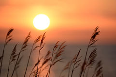 Grass whit a colorful sunset in the background Stock Images