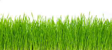 Grass on white Royalty Free Stock Image