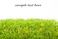 Grass on white Royalty Free Stock Photography