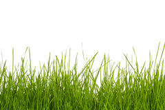 Grass on white Royalty Free Stock Photo