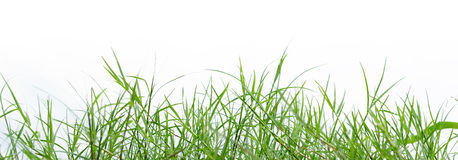 Grass on white. Green grass on white BG Stock Photo